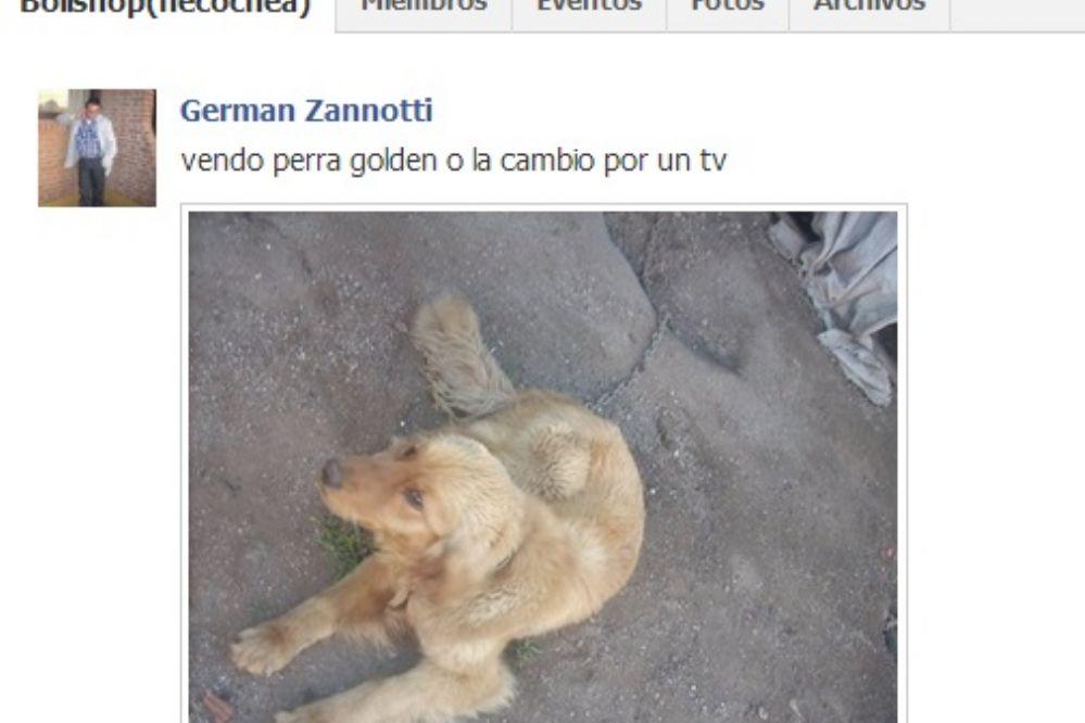 Cambian perra por TV en Bolishop