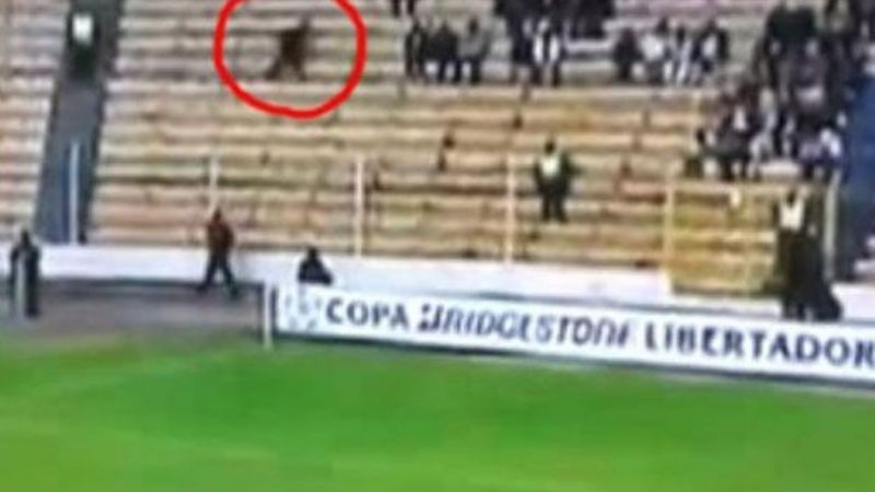 "Video: Fox Sport filmó un ""fantasma"" en pleno partido de Libertadores"
