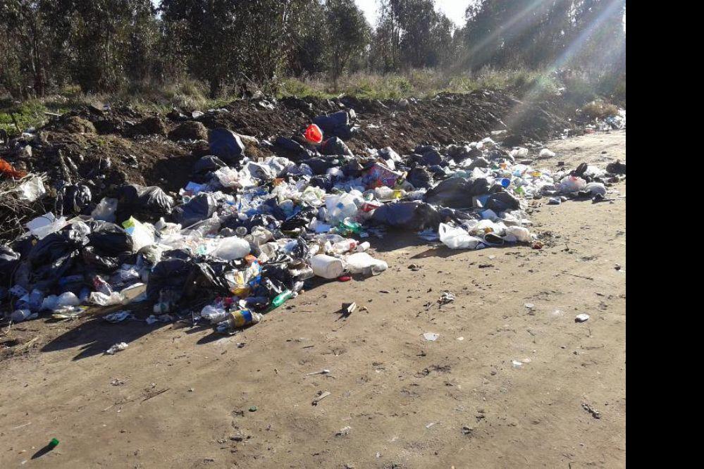 ¿Cómo son las multas municipales por tirar basura?
