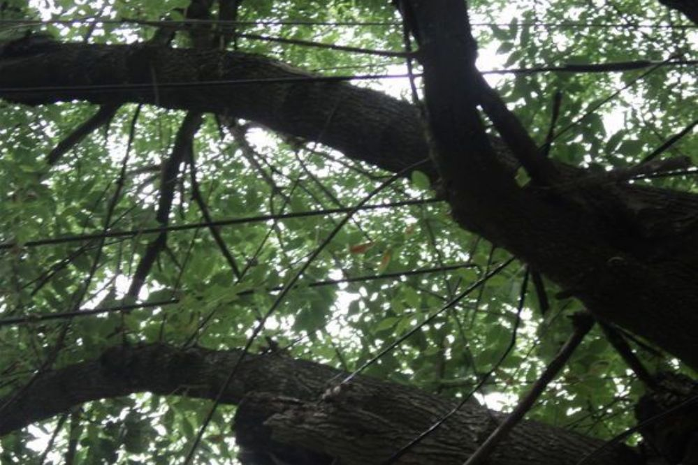 Llamando a la Usina: Peligrosa mezcla entre ramas de árboles y ...