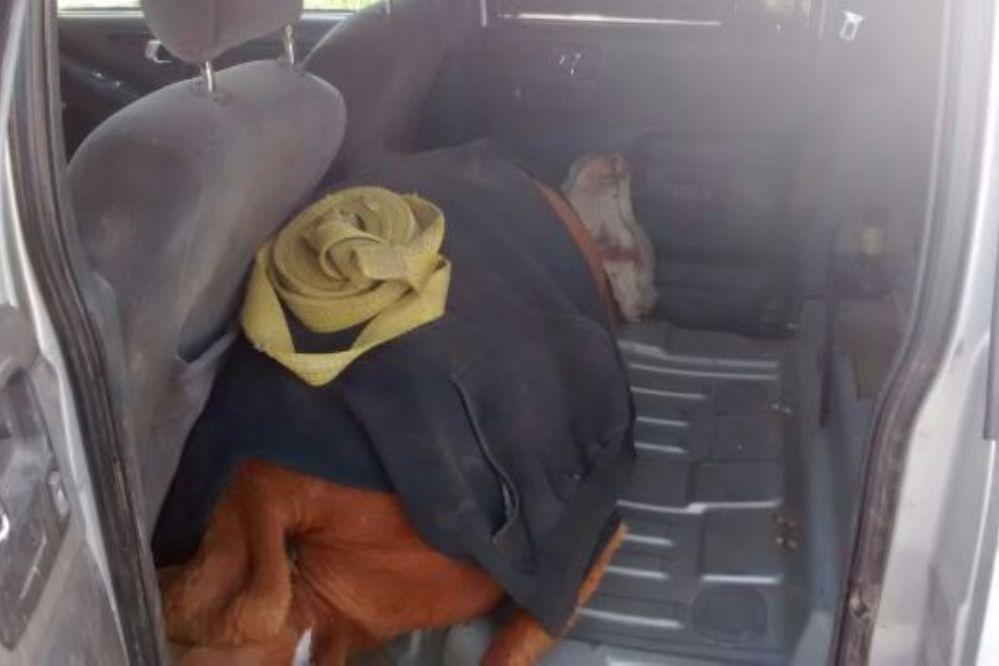 Cuatreros abandonaron camioneta con una vaquillona en el asiento trasero