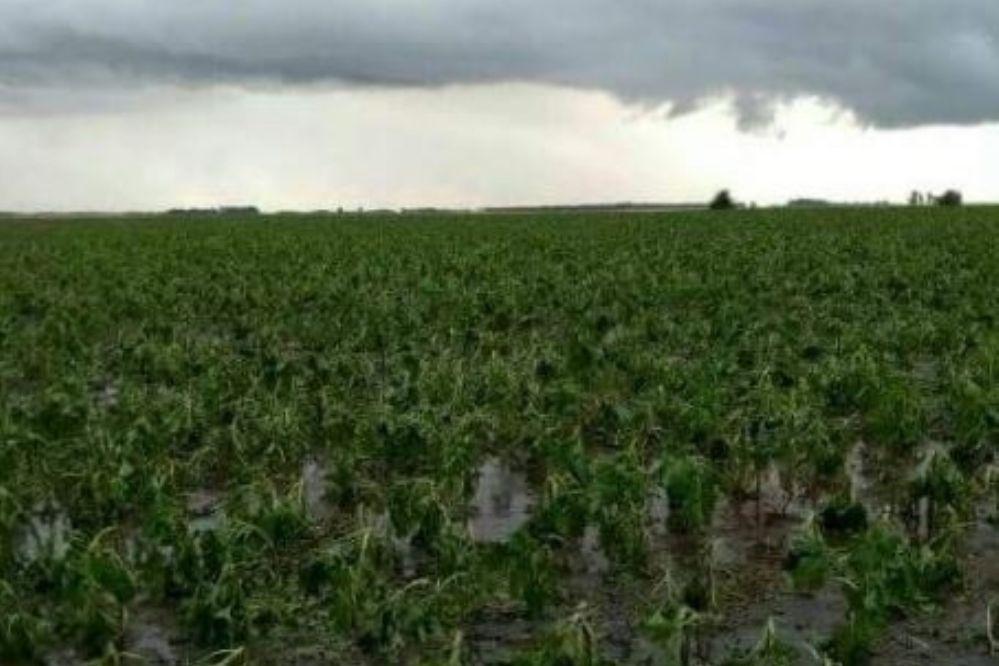 Fotos y videos: El granizo destrozó cultivos en Necochea y partidos vecinos