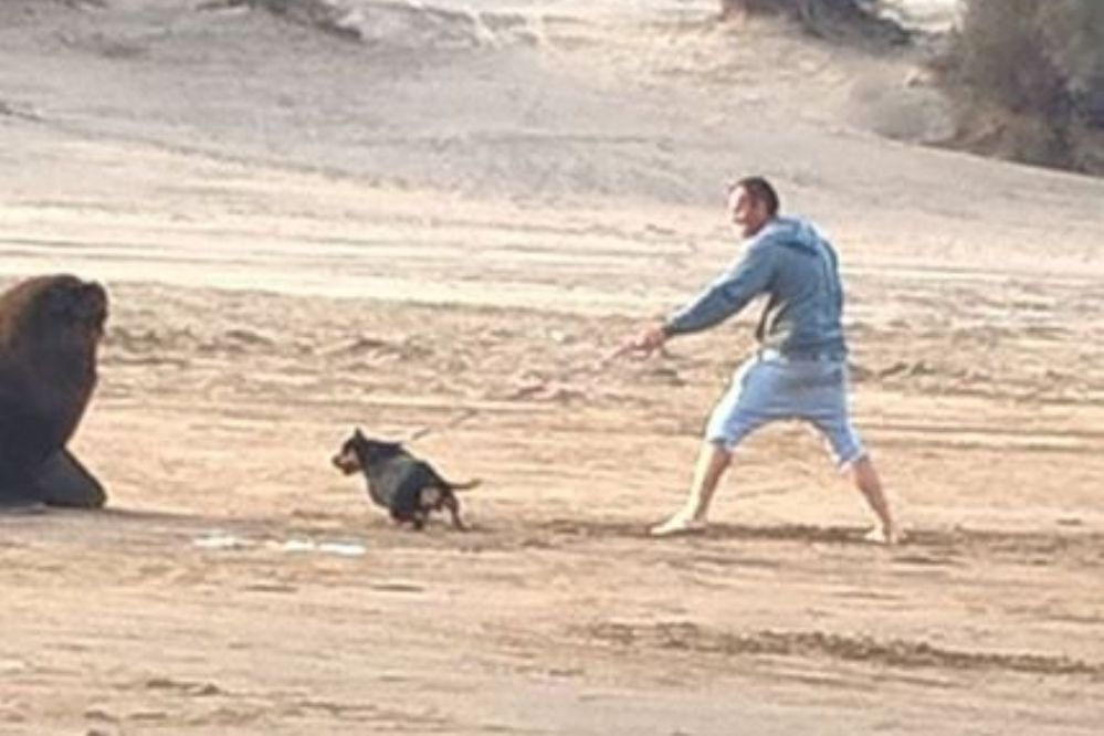 #Wassap4V: Incitaba a su perro a hostigar a un lobo marino