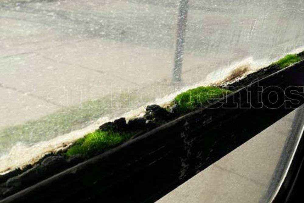 Insólito: Creció musgo en la ventanilla de un colectivo necochense
