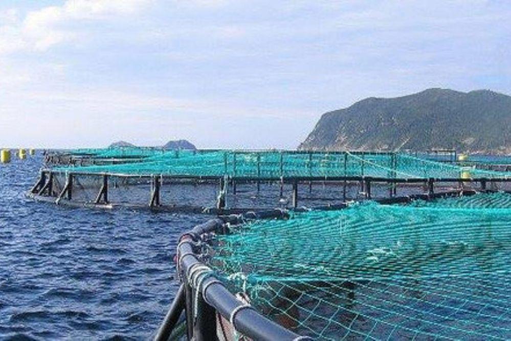 Se aprobó la instalación de salmoneras en el mar argentino